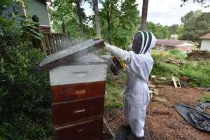050716-beekeeping-hs08