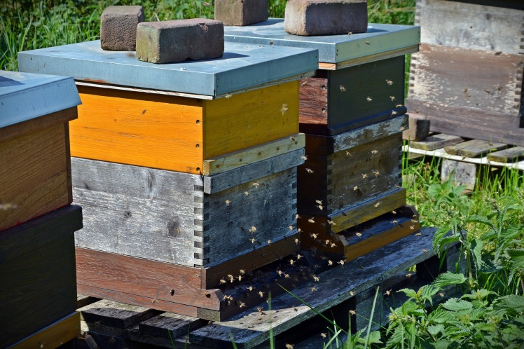 bees-1578726_1920